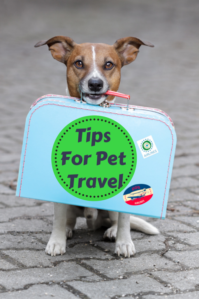 pet travel tips